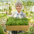 impianti · fiori · erbe · giardino · giardinaggio · verde - foto d'archivio © iko