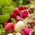 organisch · radijs · lokaal · markt · gezondheid · groene - stockfoto © iko