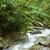 nuvem · floresta · Equador · pequeno · cachoeira · rochas - foto stock © ildi