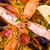 krewetka · ryżu · żywności · ryb - zdjęcia stock © ilolab