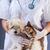 veterinario · perro · gato · espera · médicos · rojo - foto stock © ilona75