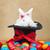 aranyos · mogorva · húsvéti · nyuszi · színes · festett · tojások - stock fotó © ilona75