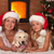 christmas with our doggie stock photo © ilona75