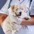 veeartsenijkundig · zorg · spuit · jongen · huisdier · kinderen - stockfoto © ilona75