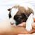 Small puppy dog in woman hand stock photo © ilona75