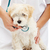 Veterinary care concept - small fluffy dog at checkup stock photo © ilona75