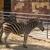 kettő · zebrák · etetés · fű - stock fotó © imagedb