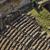 high angle view of ruins of ancient roman amphitheatre stock photo © imagedb
