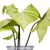 bitki · yaprak · yeşil · fotoğrafçılık · yalıtılmış - stok fotoğraf © imagedb