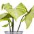 plant · blad · groene · fotografie · geïsoleerd - stockfoto © imagedb