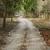 yol · orman · bölge · Hindistan · ağaç · Asya - stok fotoğraf © imagedb