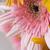 Daisy · kwiaty · kroplami · wody · biały · kwiat - zdjęcia stock © imagedb