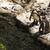 pingvin · állatkert · Barcelona · kő · Európa · fotózás - stock fotó © imagedb
