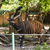 животных · зоопарка · Cartoon · дерево · природы · пейзаж · деревья - Сток-фото © imagedb