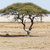 safari · park · Namibya · ağaç · manzara · Afrika - stok fotoğraf © imagex