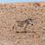 dağ · zebra · Namibya · çöl · Afrika · gökyüzü - stok fotoğraf © imagex