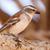 kadın · kuş · Namibya · çöl · Afrika · hayvan - stok fotoğraf © imagex