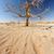 枯れ木 · ナミビア · 砂漠 · アフリカ · 空 · 風景 - ストックフォト © imagex