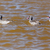 Namibya · kuş · Afrika · göz · deniz · grup - stok fotoğraf © imagex