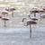 flamingo · Namibya · kuş · su · aile · okyanus - stok fotoğraf © imagex