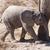 safari · park · Namibya · doğa · seyahat · hayvan - stok fotoğraf © imagex