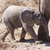 genç · fil · safari · park · Namibya · bebek - stok fotoğraf © imagex