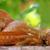 brood · houten · tafel · tarwe · oor · textuur · natuur - stockfoto © inaquim