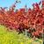 bağ · sonbahar · Portekiz · gökyüzü · manzara · meyve - stok fotoğraf © inaquim