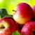 koninklijk · gala · appels · drie · kunstgras · witte - stockfoto © inaquim
