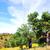 chêne · arbres · forêt · Portugal · arbre - photo stock © inaquim
