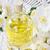 essential oil stock photo © ingridsi