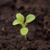 impianto · crescita · suolo · inizio · natura · care - foto d'archivio © inxti