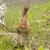 aranyos · piros · mókus · erdő · zöld · természetes - stock fotó © inxti