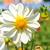 oranje · dahlia · bloem · mooie · geïsoleerd · witte - stockfoto © inxti