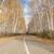 estrada · outono · bétula · natureza · paisagem · folhas - foto stock © inxti