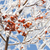 kırmızı · karpuzu · kış · kar · ahşap · arka · plan - stok fotoğraf © inxti