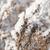 草 · 雪 · 冬 · 白 - ストックフォト © inxti