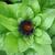lagarta · imagem · macro · céu · primavera · folha - foto stock © inxti
