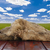 bois · bord · herbe · ciel · printemps · fond - photo stock © inxti