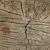 álamo · cortar · rachaduras · abstrato · madeira · floresta - foto stock © inxti