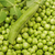 green peas and green pea pods as a background stock photo © inxti