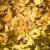 yellow tree leaves stock photo © iofoto