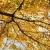 vallen · iep · boom · gouden · najaar · oude - stockfoto © iofoto