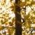 tree with yellow leaves stock photo © iofoto
