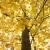 tree with yellow fall foliage stock photo © iofoto