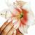 szépség · kezek · manikűr · tart · virág · liliom - stock fotó © iordani