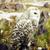close up portrait of wild nature owl lifestyle real bird stock photo © iordani