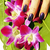 bright colored photo of fingernails with manicure and orchids ma stock photo © iordani