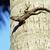 medium lizard in wild nature on palm tree stock photo © iordani