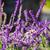 ハチドリ · 飛行 · 分離 · 鳥 · 影 · 高速 - ストックフォト © iriana88w